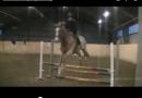 Mer hästar på Youtube